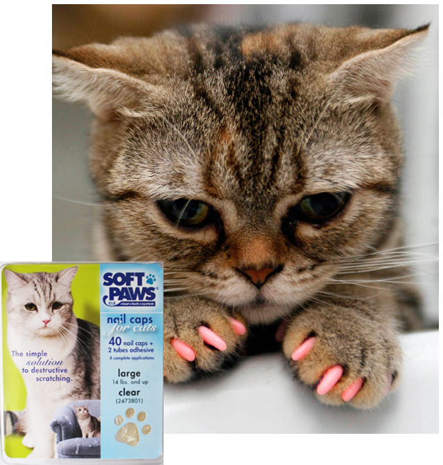 Declawing The Routine Procedure That Owners Still Request